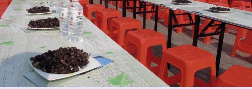 无棣第七届千年古桑旅游文化节将于5月20日开幕