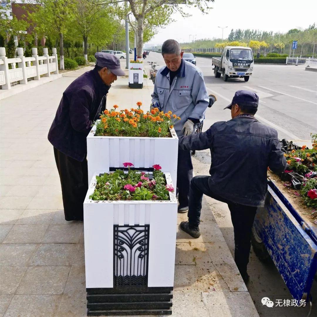 无棣县投资240万元绿化城区