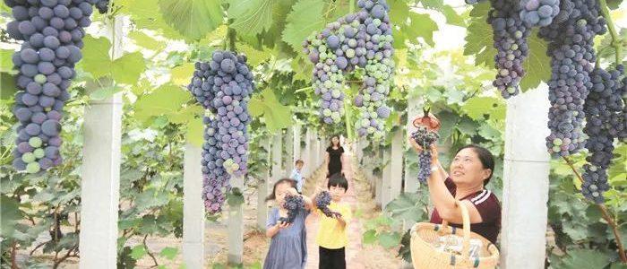 无棣:家庭农场成暑假乐园