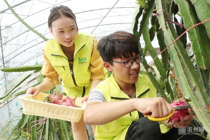 """""""棣求村""""牌水果、蔬菜畅销线上线下"""