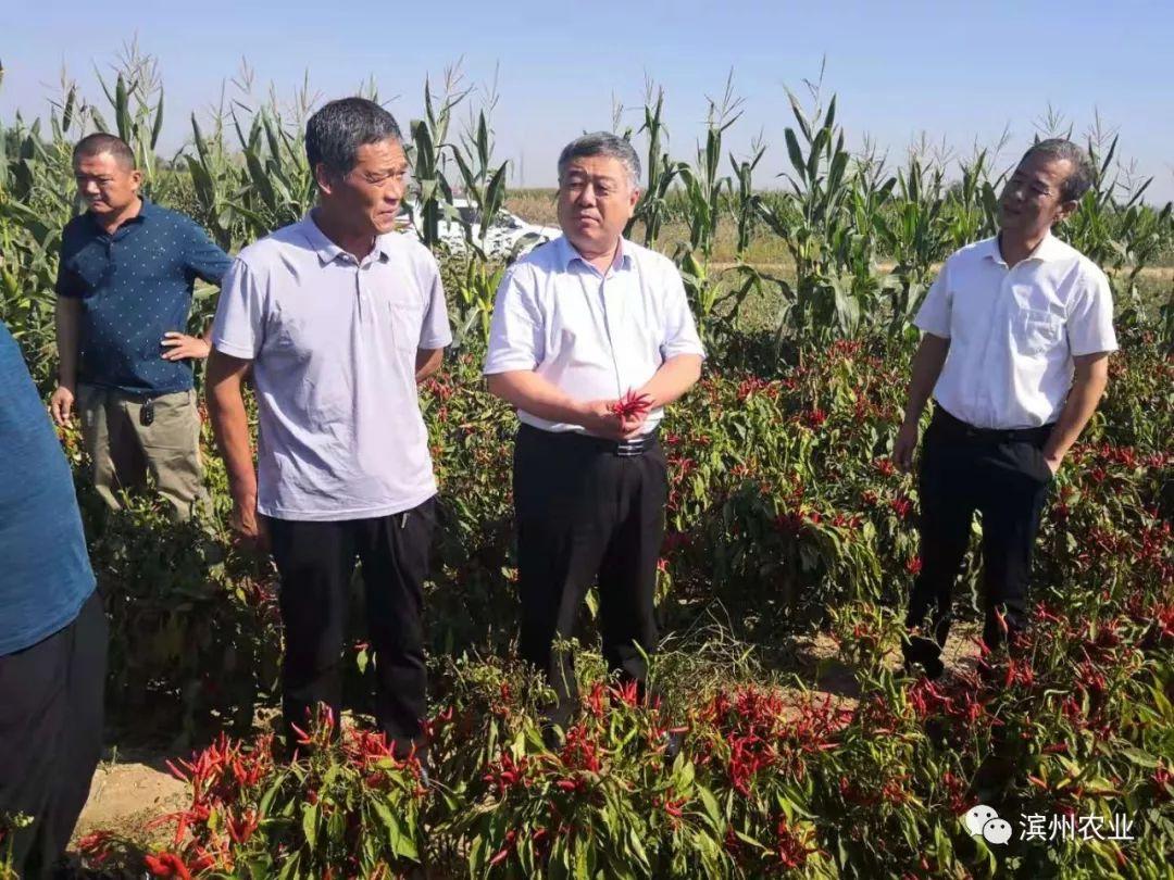 王寿岐同志到无棣对辣椒产业发展情况进行调研