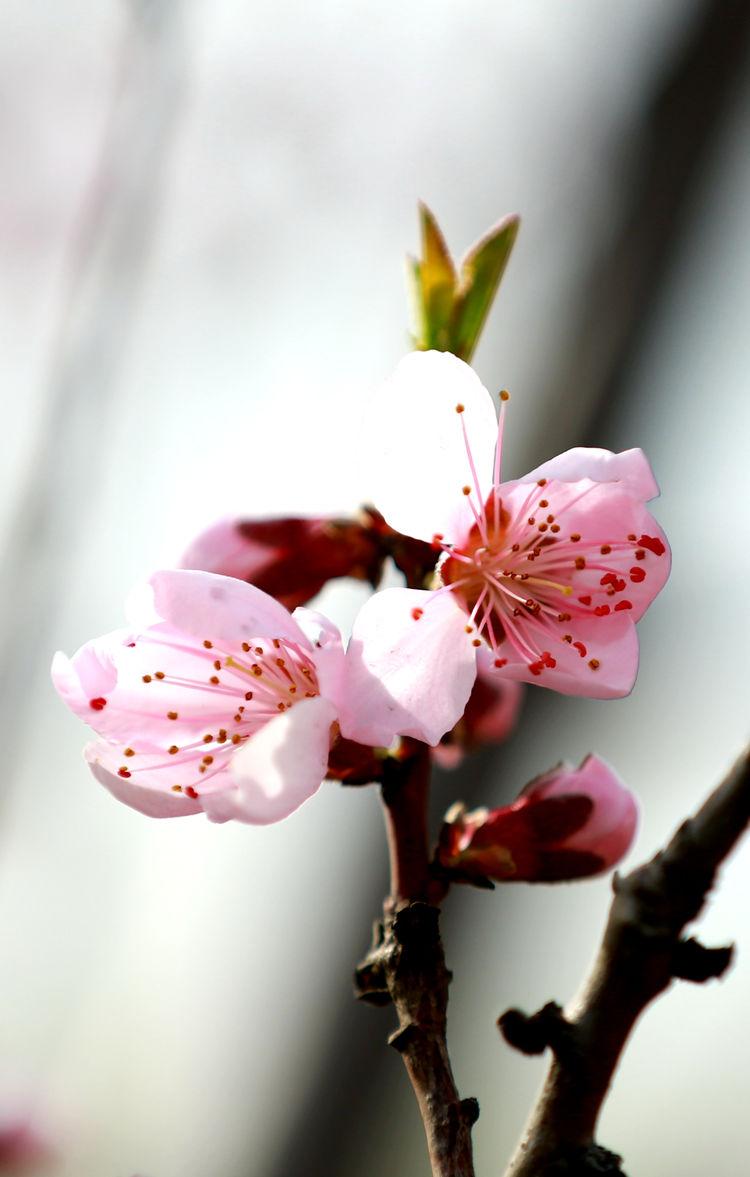阴霾散去 春暖花开 无棣县古城