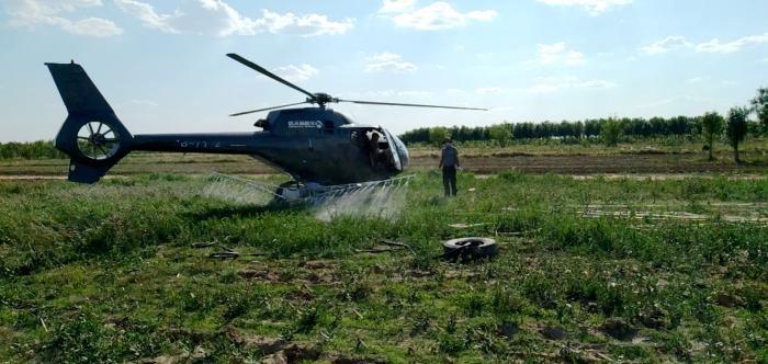 无棣飞机防治美国白蛾62万亩
