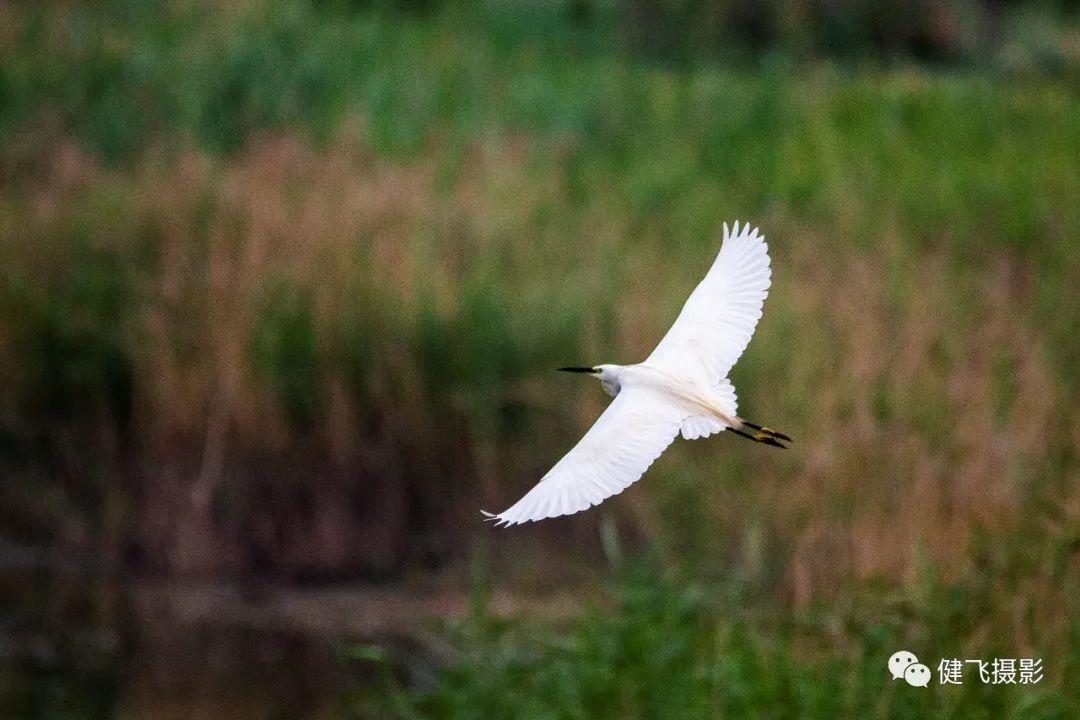 生态环境不断提升,越来越多珍稀禽类落户无棣
