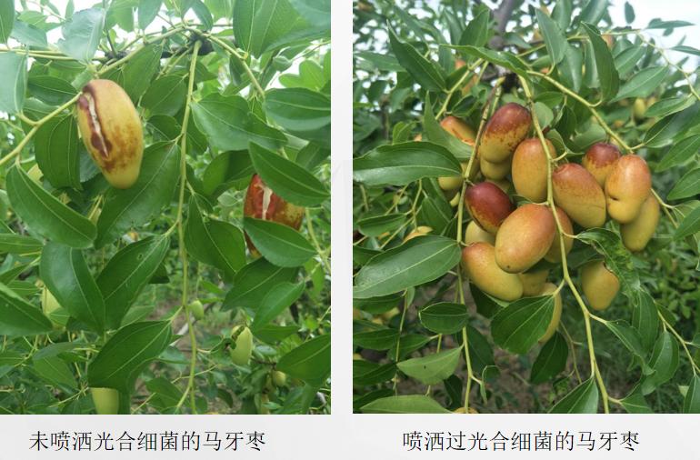 枣产业发展培训会在无棣县顺利召开
