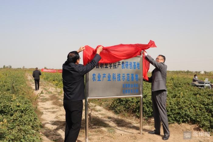 东营职业学院助力无棣车王镇金丝小枣林下中药材科研示范项目的揭牌