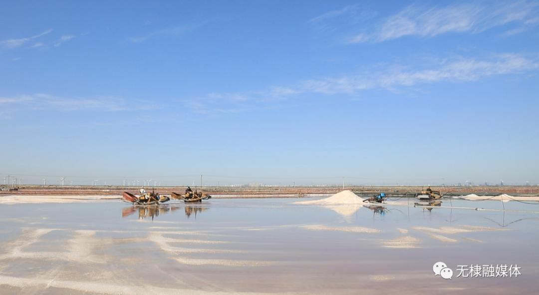 无棣县315万公亩秋盐迎来收获季