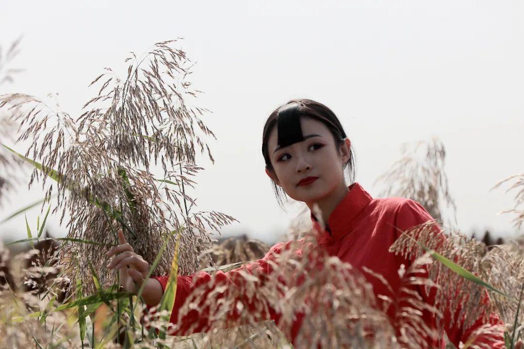 在无棣有一种美,叫秋天的芦苇