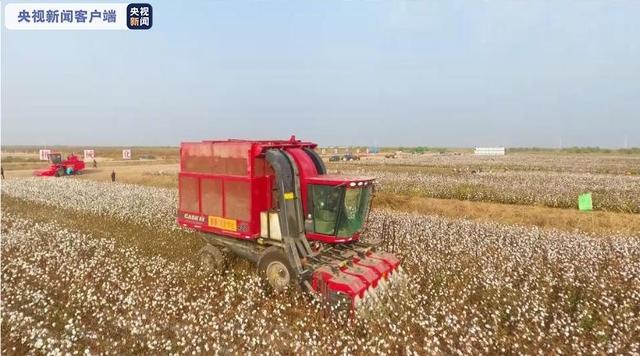 山东无棣9.8万亩棉花迎来丰收 机械化采收进行时